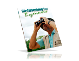 Free PLR eBook – Birdwatching for Beginner